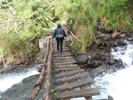 Emily walking on a sketchy bridge during our hike through the jungle.